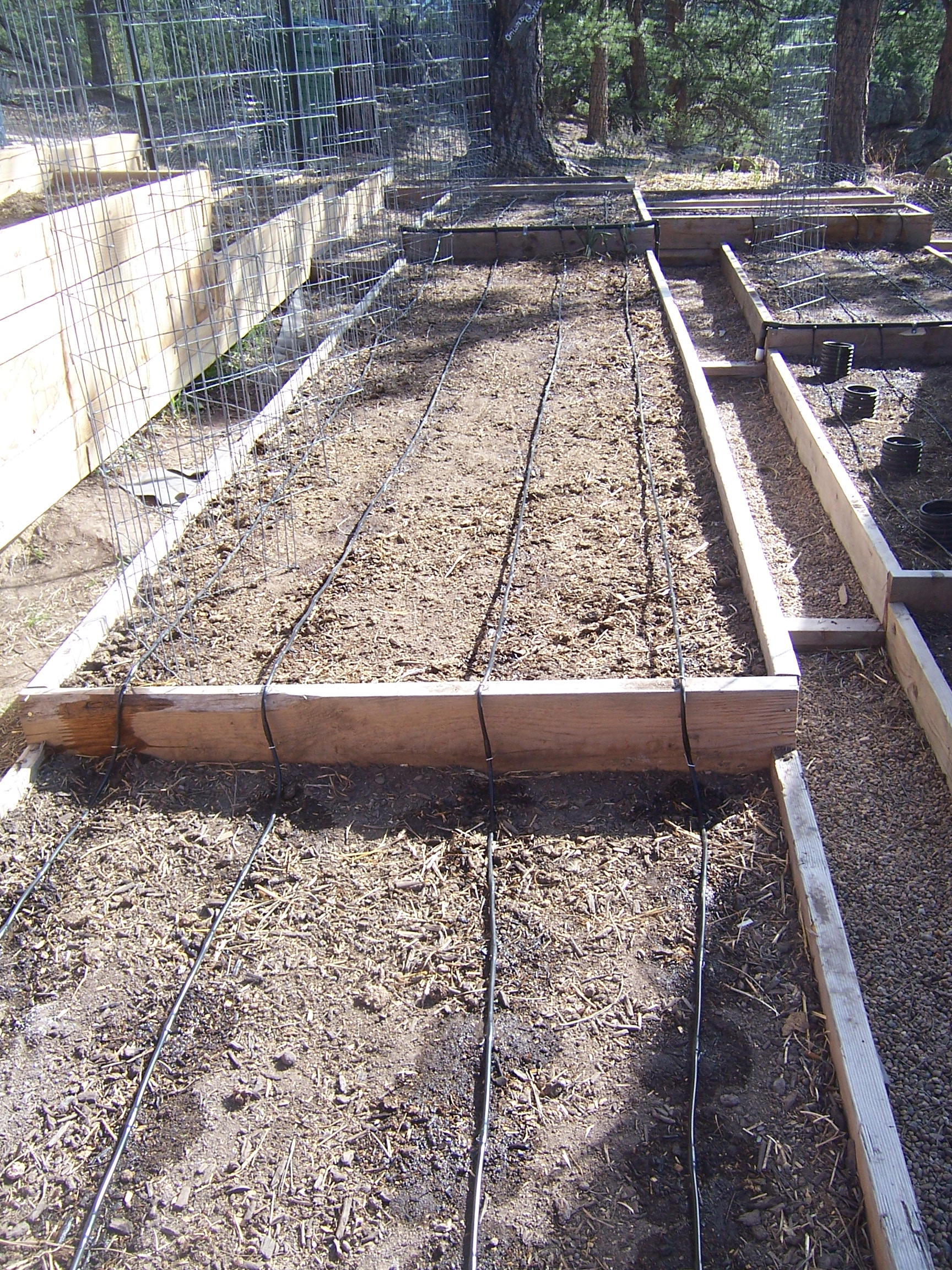 Drip Irrigation System In The Vegetable Garden Willow Creek Farm